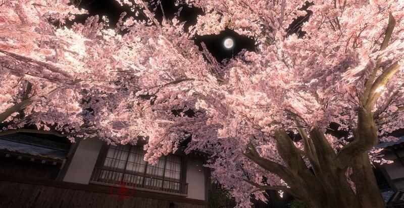 中央の桜と月